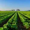 misura 1.1.1 - patentino fitosanitario